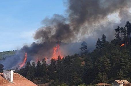 """Пожар е обхванал близо 60 декара иглолистна гора над квартал """"Анезица"""" във Велинград"""