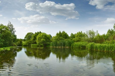 Пестициди над нормата са открити в река Пишманка като са причинили измирането на рибата