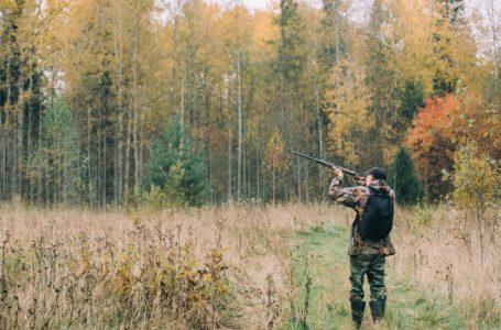 Издадените разрешителни за групов лов на дива свиня в област Пазарджик са 666