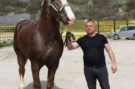 Сунай Караасан: Обичам конете от дете, любовта им е чиста и безрезервна