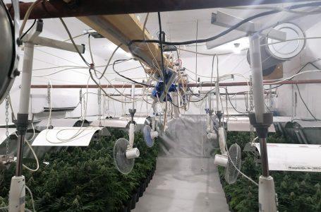 В Козарско откриха двуетажна оранжерия за марихуана